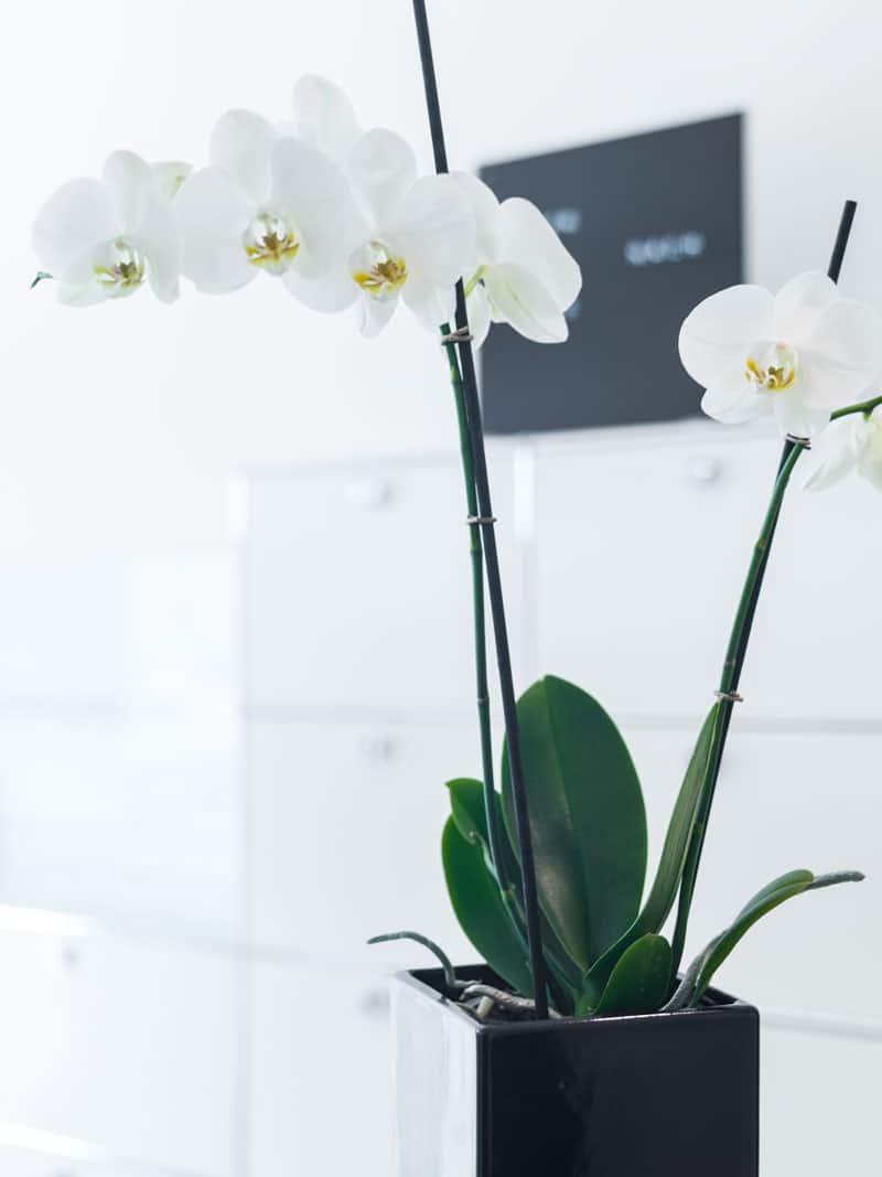 Orchidee in der Zahnarztpraxis Dr. Axel Ruppert